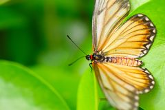 The beautiful butterfly. The butterfly fall a plant Stock Images