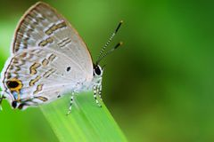 The beautiful butterfly. The butterfly fall a plant Royalty Free Stock Images