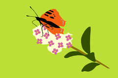 Beautiful butterfly. Beautiful orange butterfly sitting on a privet royalty free illustration