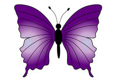 Beautiful Butterfly. Large purple butterfly illustration / drawing vector illustration