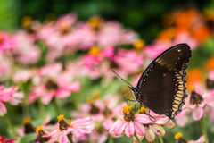 Beautiful Butterfly And Flowers Royalty Free Stock Photos