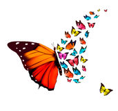 Beautiful butterfly background. Royalty Free Stock Image