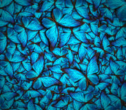 Beautiful butterfly background. Beautiful background with lot of different butterflys Stock Image