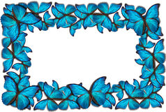 Beautiful butterfly background Royalty Free Stock Images