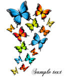 Beautiful butterfly background. Stock Photography