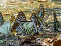 Golden Butterfly on ground. Autumn background with leaves and butterflies. stock photography