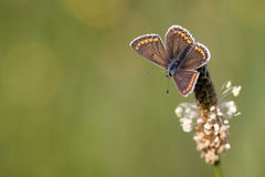 Beautiful butterfly with blurred background Stock Image