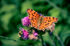Beautiful butterfly and bumblebee sitting on the flower. Beautiful butterfly and bumblebee sitting on the violet thistle royalty free stock photography