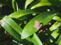 Beautiful butterfly catching sun royalty free stock image
