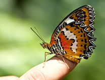 Beautiful butterfly on child finger. stock photography