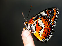 Beautiful butterfly on child finger. Royalty Free Stock Photo