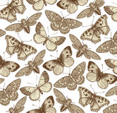 Beautiful Butterfly, cicada and insect. Antique Animal Illustrations. Fauna. Drawing engraving. Background pattern. Vintage vector Royalty Free Stock Image