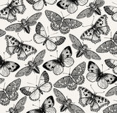 Beautiful Butterfly, cicada and insect. Antique Animal Illustrations. Fauna. Drawing engraving. Background pattern. Vintage vector Royalty Free Stock Photo