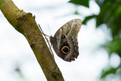 Beautiful butterfly closeup in nature Royalty Free Stock Photos