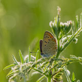 Beautiful butterfly collects nectar from meadow flowers Stock Photo