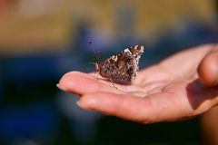 Beautiful brown butterfly closeup in profile sits on the palm royalty free stock photography