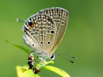 Beautiful butterfly decends on the flower. Butterfly looks for food and pollination every day in the morning Royalty Free Stock Image