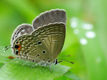 Beautiful butterfly decends on the flower. Butterfly looks for food and pollination every day in the morning Royalty Free Stock Photo