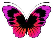 Beautiful butterfly for a design Stock Photography