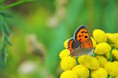 Beautiful butterfly on the flower stock images