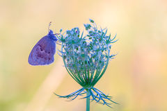 Beautiful butterfly extreme closeup Stock Photography