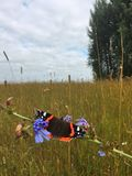 Beautiful butterfly in the field royalty free stock images