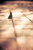 Beautiful Butterfly on the floor Royalty Free Stock Photography