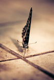 Beautiful Butterfly on the floor Stock Photos