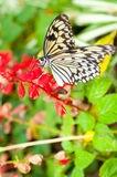 Beautiful butterfly on flower Royalty Free Stock Images