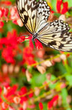 Beautiful butterfly on flower Royalty Free Stock Photo