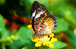 Beautiful butterfly on a flower royalty free stock photo