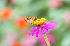 Beautiful butterfly with flower and blurred background. Beautiful butterfly on flower and blurred background attractive beauty black blue butterflies close up stock images
