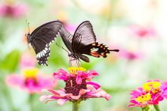 Beautiful butterfly on flower and blurred background. Attractive beauty black blue butterflies close up color colorful flying fragility freedom green insect stock photo