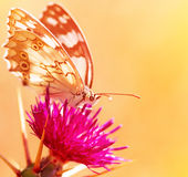 Beautiful butterfly on flower Royalty Free Stock Image