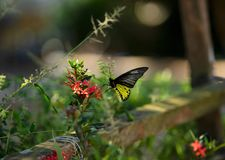 Beautiful butterfly on the flower stock image