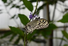 Beautiful butterfly on a flower in a garden stock images