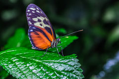 A beautiful butterfly on a flower Stock Images