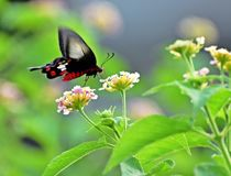 Beautiful butterfly on flower stock photography