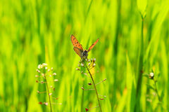 beautiful butterfly on flower Stock Image