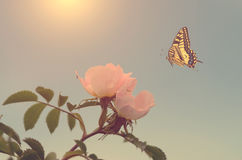 Beautiful butterfly and flower Stock Photography