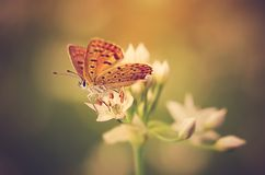 Beautiful butterfly on flower Stock Images