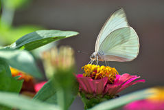 Beautiful butterfly on a flower. In summer with a colorful background Stock Photography