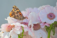 Beautiful butterfly on a flower. In summer with a colorful background Royalty Free Stock Image