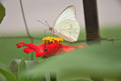 Beautiful butterfly on a flower Royalty Free Stock Photography
