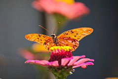 Beautiful butterfly on a flower Royalty Free Stock Image