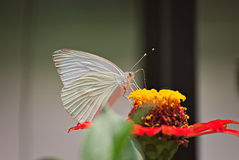 Beautiful butterfly on a flower. In summer with a colorful background Stock Images