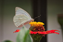 Beautiful butterfly on a flower. In summer with a colorful background Royalty Free Stock Photography