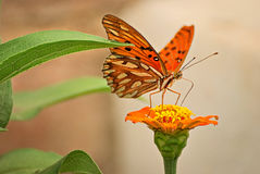 Beautiful butterfly on a flower Stock Photos