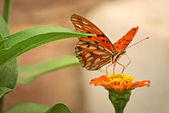 Beautiful butterfly on a flower. In summer with a colorful background Stock Photos