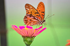 Beautiful butterfly on a flower. In summer with a colorful background Royalty Free Stock Images